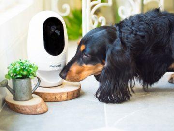 Hund vor Tierkamera